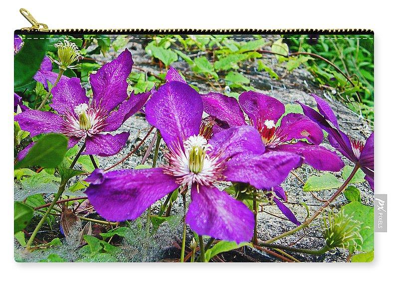Purple Carry-all Pouch featuring the photograph Clematis Abby Aldrich Rockefeller Garden by Lizi Beard-Ward