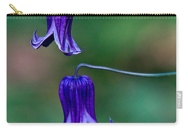 Clematis Carry-all Pouch featuring the photograph Clematis Integrifolia Rooguchi 2 by Douglas Barnett