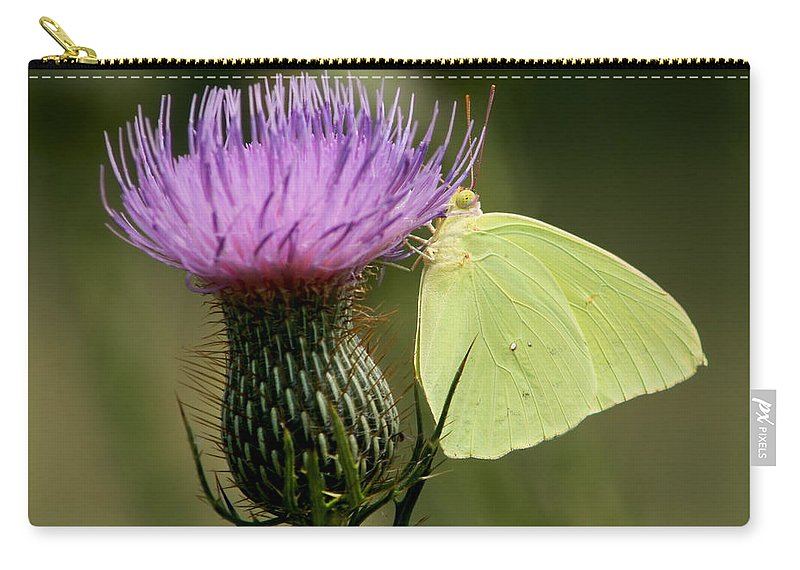 Phoebis Sennae Carry-all Pouch featuring the photograph Cloudless Sulfur Butterfly On Bull Thistle Wildflower by Kathy Clark