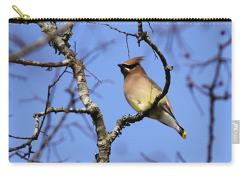 Cedar Waxwing Carry-all Pouch featuring the photograph Cold Feet by Travis Truelove