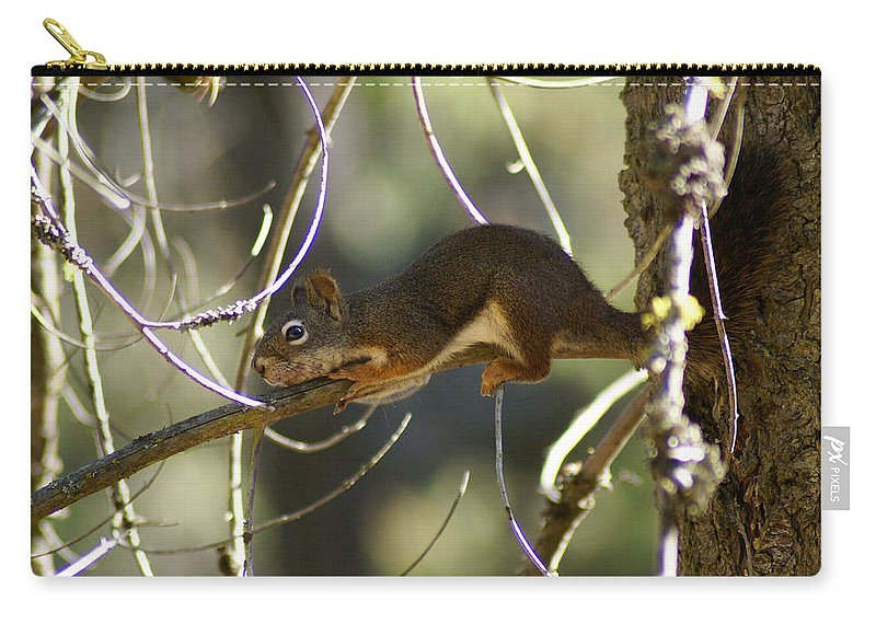Squirrel Carry-all Pouch featuring the photograph Comfy In A Tree by Ben Upham III