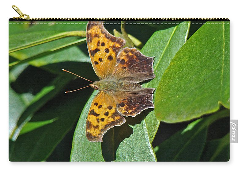 Polygonia C Album Carry-all Pouch featuring the photograph Comma Anglewing Butterfly - Polygonia C-album by Mother Nature