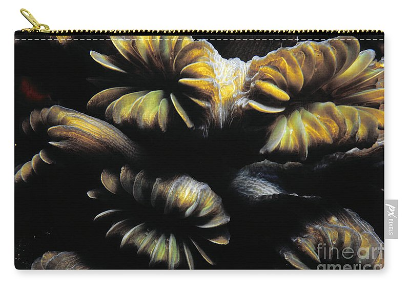 Coral Carry-all Pouch featuring the photograph Coral Close Up by Mike Nellums