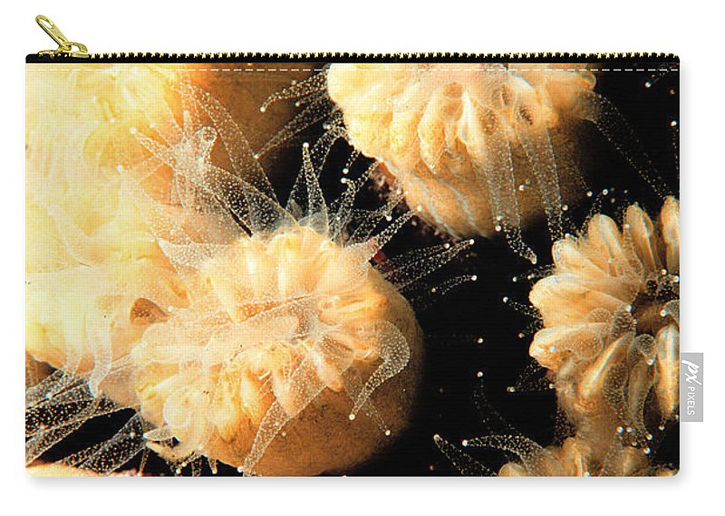 Coral Carry-all Pouch featuring the photograph Coral Feeding by Mike Nellums