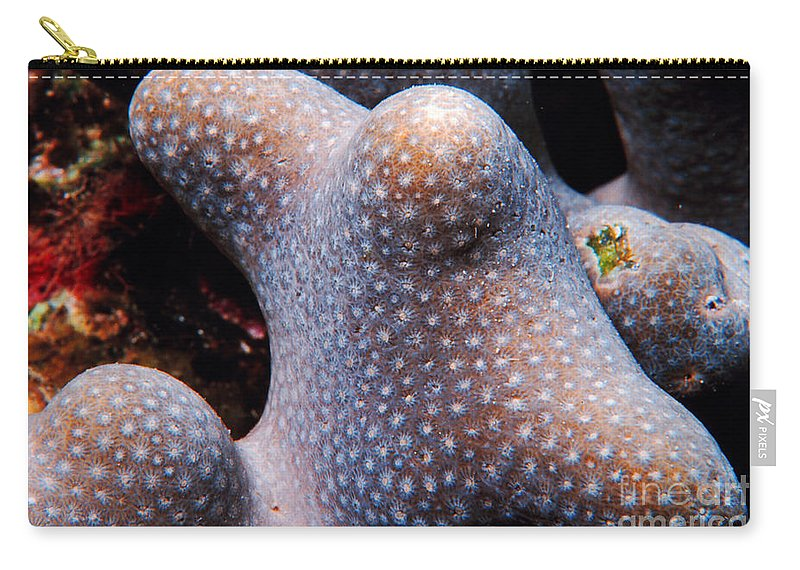 Coral Carry-all Pouch featuring the photograph Coral by Mike Nellums