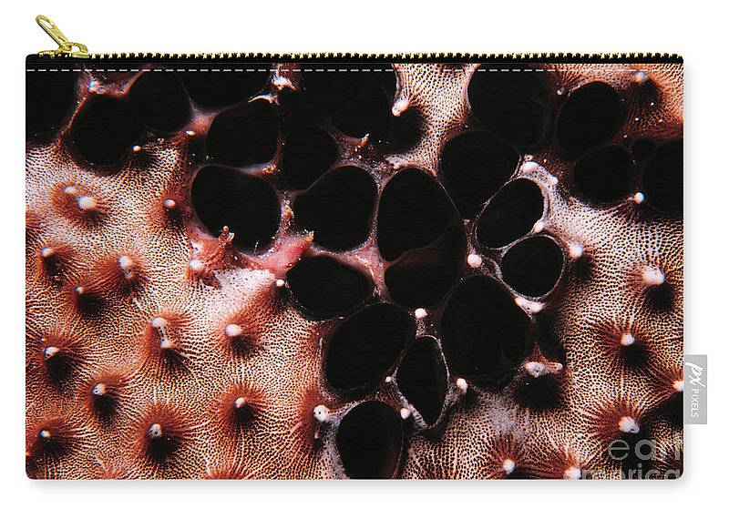 Coral Sponge Carry-all Pouch featuring the photograph Coral Sponge 1 by Mike Nellums