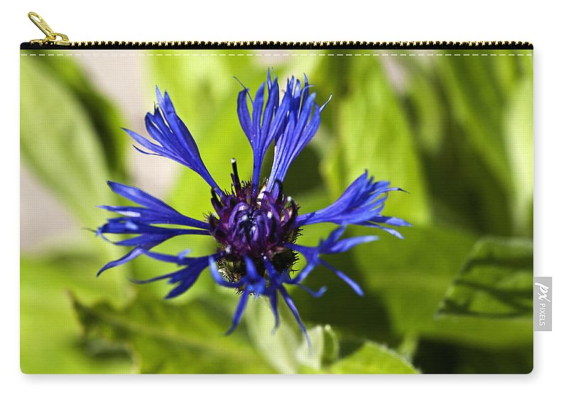 Cornflower Bud Carry-all Pouch featuring the photograph Cornflower by Steve Purnell