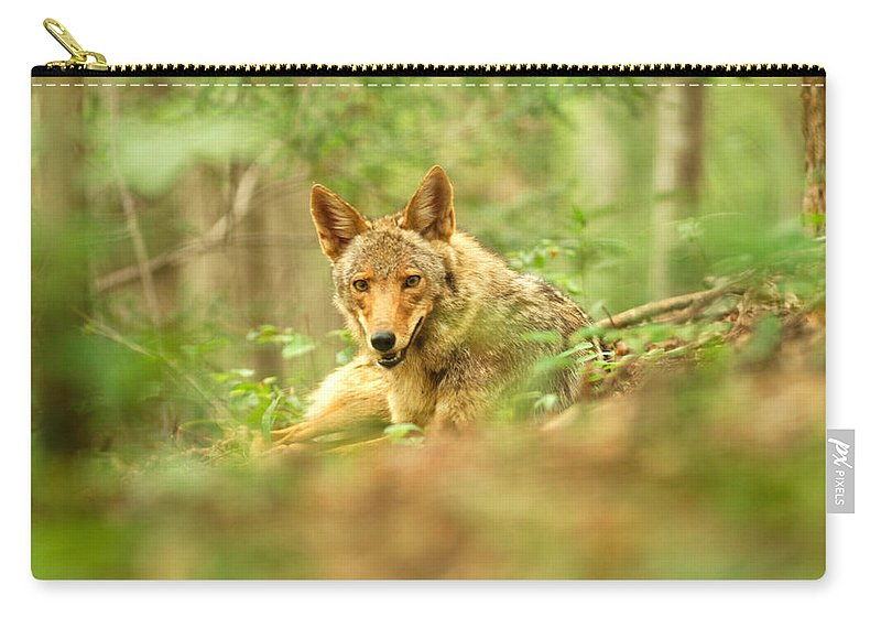 Coyote Carry-all Pouch featuring the photograph Coyote Caught Napping by Randall Branham