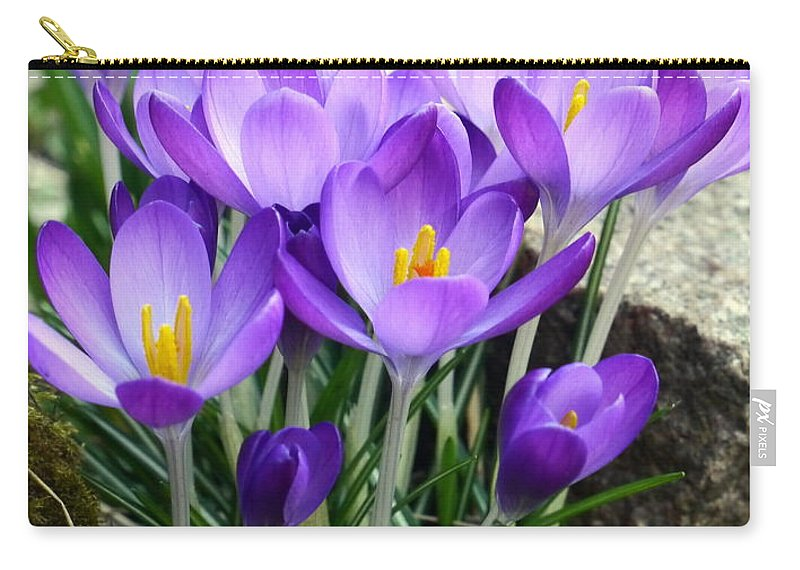 Crocus Carry-all Pouch featuring the photograph Crocuses by John Chatterley
