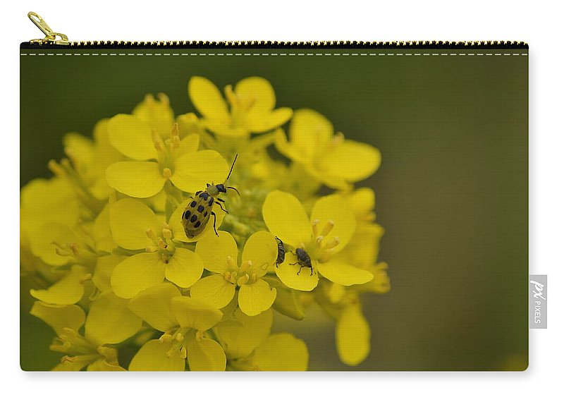 J.d. Grimes Carry-all Pouch featuring the photograph Cucumbers And Mustard by JD Grimes