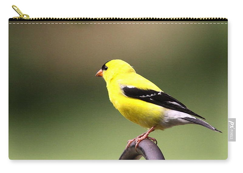 Goldfinch Carry-all Pouch featuring the photograph Daddy Gold by Travis Truelove