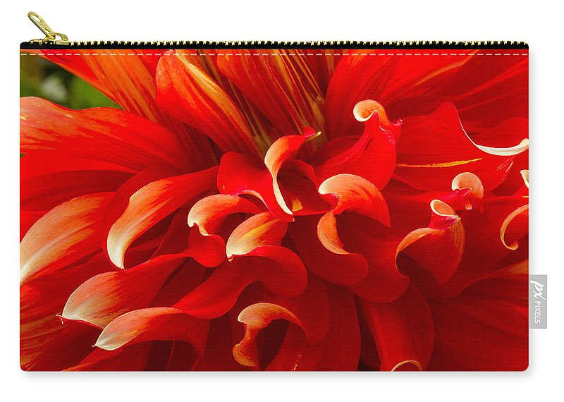 Dahlia Carry-all Pouch featuring the photograph Dahlia Close Up by Jean Noren