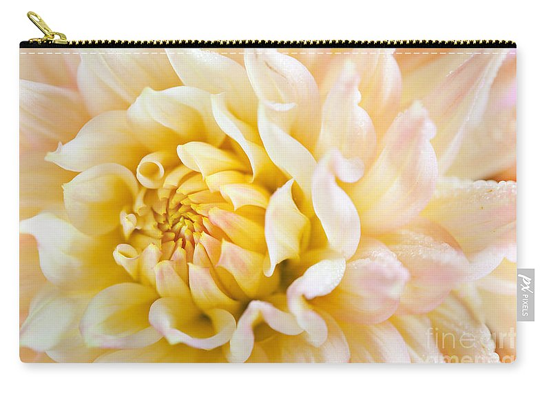 Dahlia Carry-all Pouch featuring the photograph Dahlia Flower 08 by Nailia Schwarz