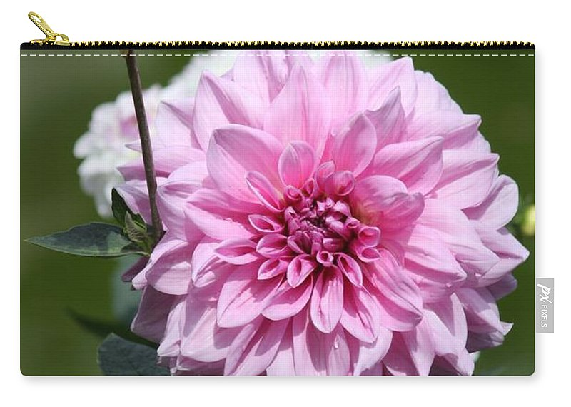 Pink Dahlia Carry-all Pouch featuring the photograph Dahlia Standout by Carol Groenen