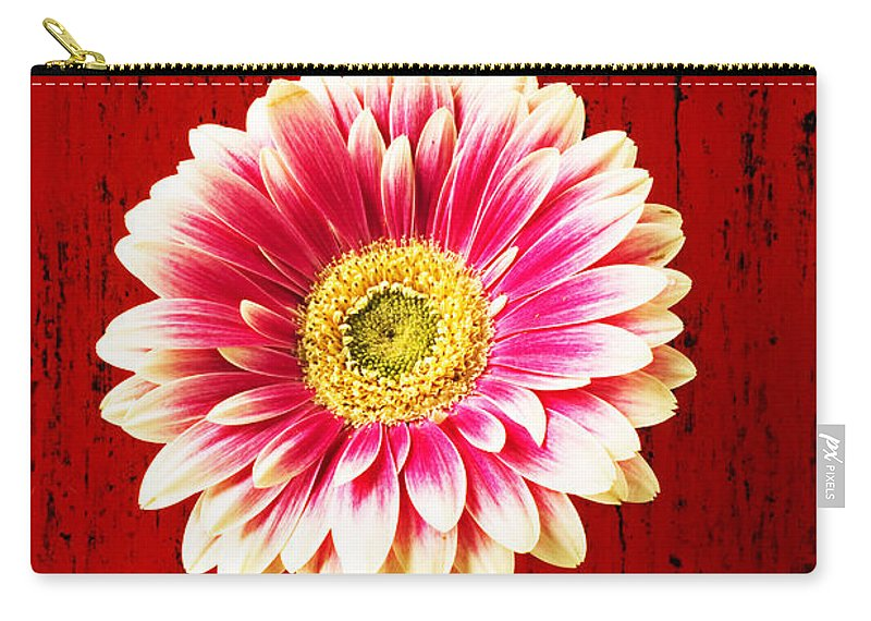 Flower Carry-all Pouch featuring the photograph Daisy In Black Vase by Garry Gay