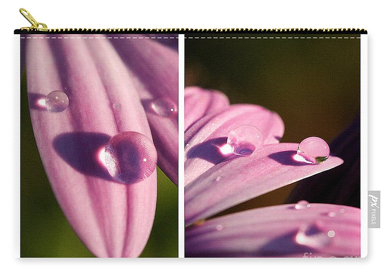 Rain Drop On Petal Carry-all Pouch featuring the photograph Daisy Rain by Brooke Roby