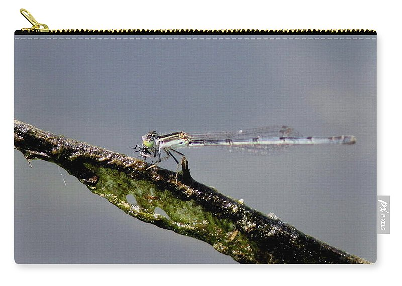 Carry-all Pouch featuring the photograph Damsel With Lunch by Travis Truelove