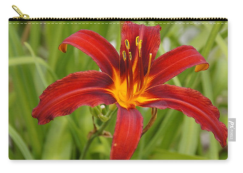 Day Lilly Carry-all Pouch featuring the photograph Day Lilly In Diffused Daylight by Mick Anderson