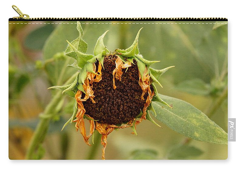 Dead Carry-all Pouch featuring the photograph Dead Sunflower by Alan Hutchins