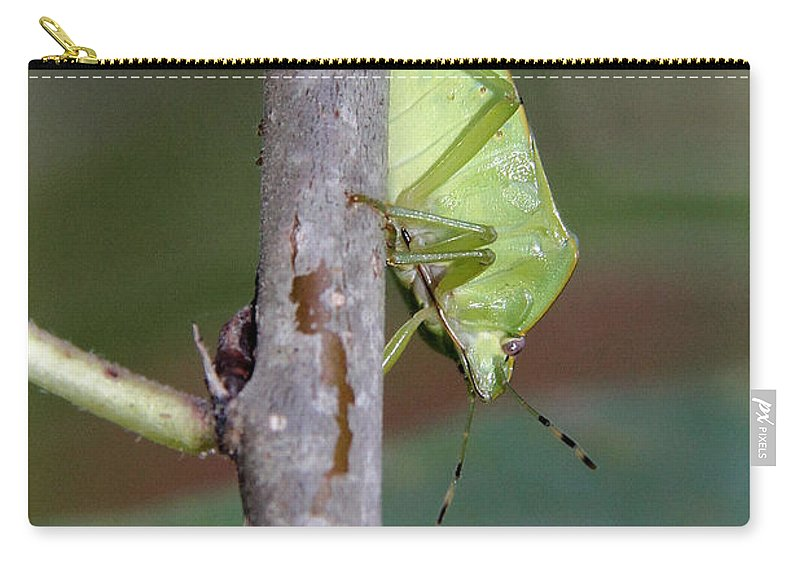 Green Stink Bug Carry-all Pouch featuring the photograph Descent Of A Green Stink Bug by Doris Potter
