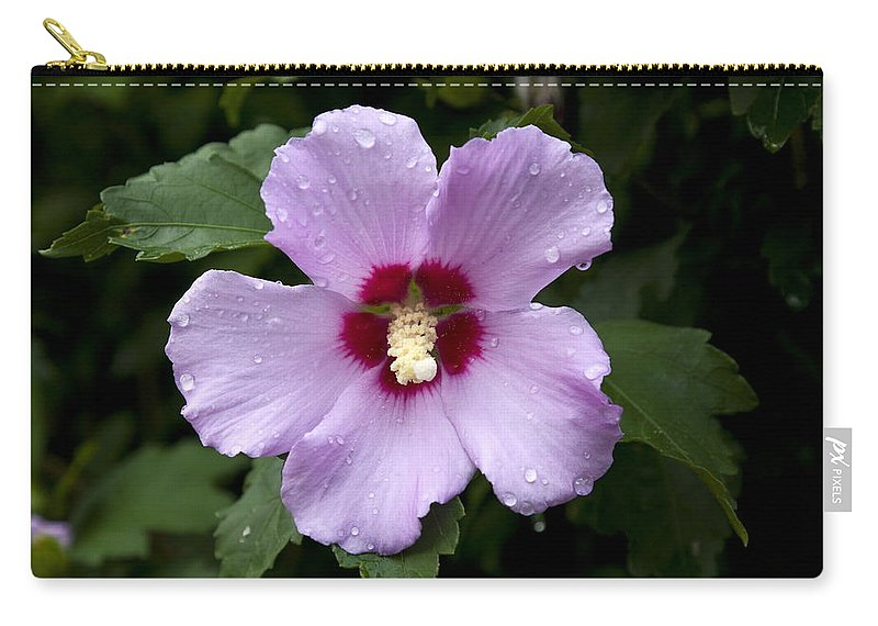 Pale Pink Hibiscus Carry-all Pouch featuring the photograph Dewey Hibiscus by Sally Weigand