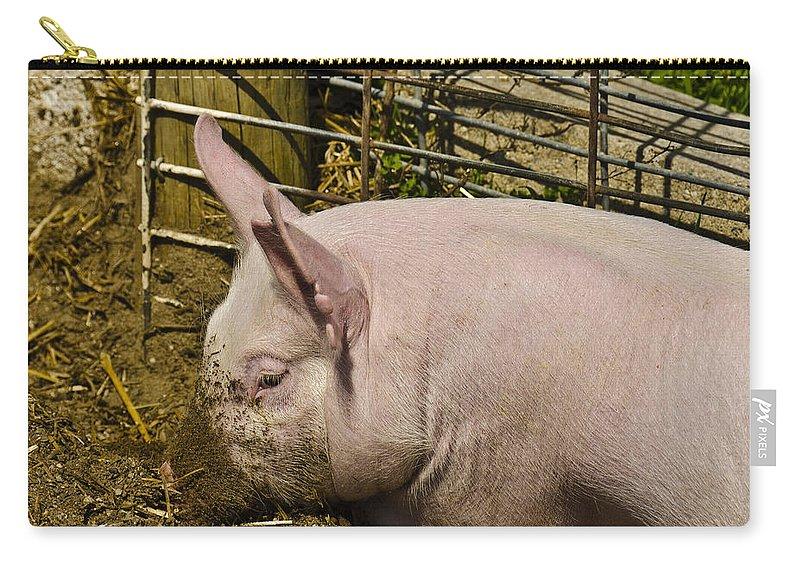 Usa Carry-all Pouch featuring the photograph Dirty Piggy by LeeAnn McLaneGoetz McLaneGoetzStudioLLCcom