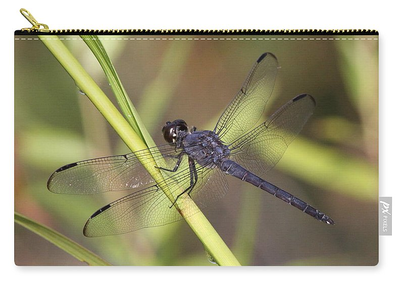 Nature Carry-all Pouch featuring the photograph Dragonfly - Little Boy Blue by Travis Truelove