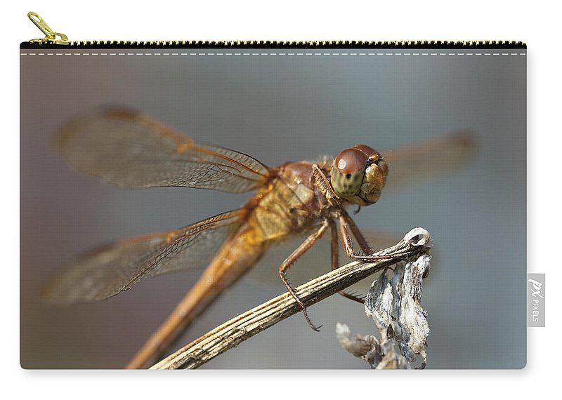 Dragonfly Carry-all Pouch featuring the photograph Dragonfly by Amy Jackson