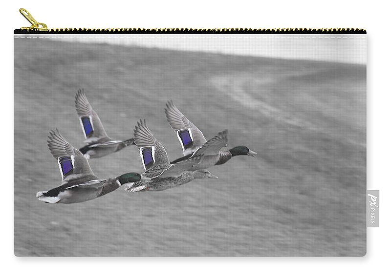 Ducks In Flight Carry-all Pouch featuring the photograph Ducks In Flight V1 by Douglas Barnard