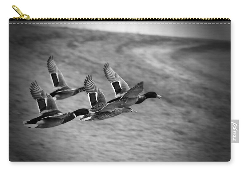 Ducks In Flight Carry-all Pouch featuring the photograph Ducks In Flight V2 Bw by Douglas Barnard