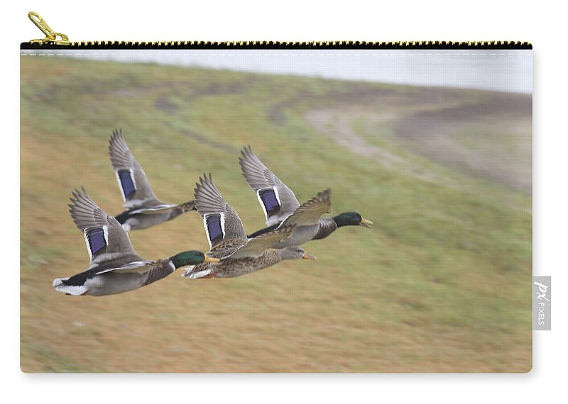 Ducks In Flight Carry-all Pouch featuring the photograph Ducks In Flight V3 by Douglas Barnard