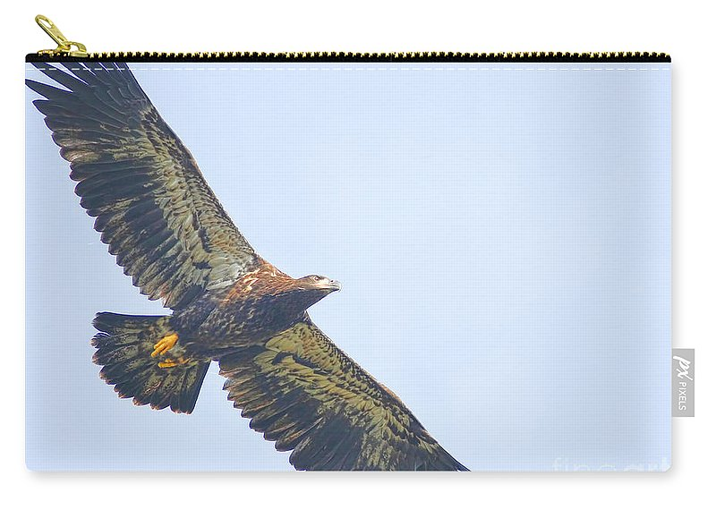 Eaglet Carry-all Pouch featuring the photograph Eaglet 2012 by Deborah Benoit