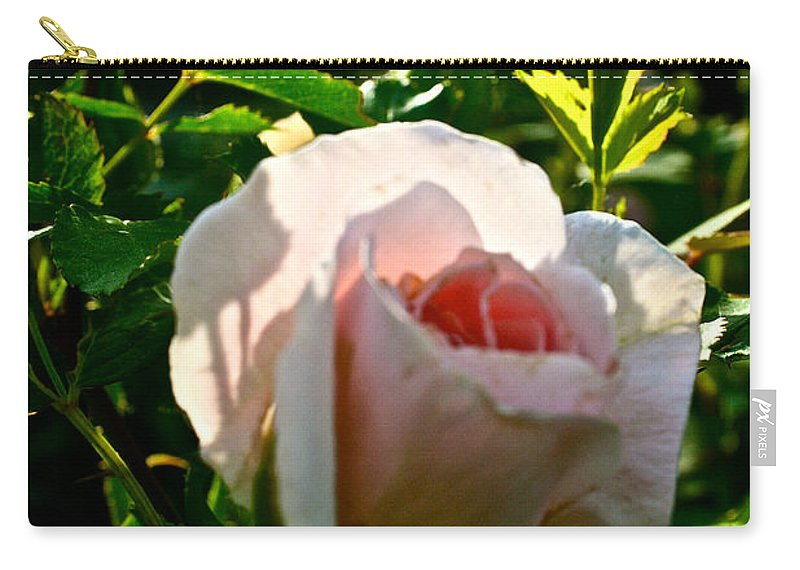 Plant Carry-all Pouch featuring the photograph Early Rose by Susan Herber
