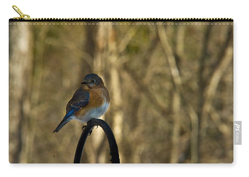 Eastern Carry-all Pouch featuring the photograph Eastern Bluebird 20 by Douglas Barnett