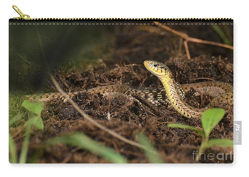 Snake Carry-all Pouch featuring the photograph Eastern Garter Snake - Checkered Coloration by TJ Baccari