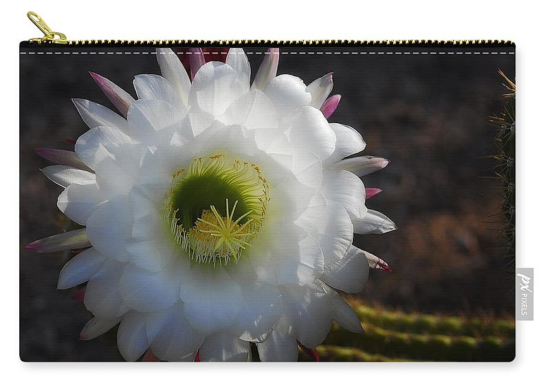 Echinopsis Candicans Carry-all Pouch featuring the photograph Echinopsis Candicans by Saija Lehtonen