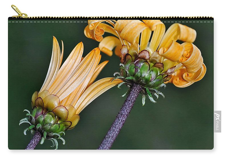 Photography Carry-all Pouch featuring the photograph Elegant Daisies by Kaye Menner