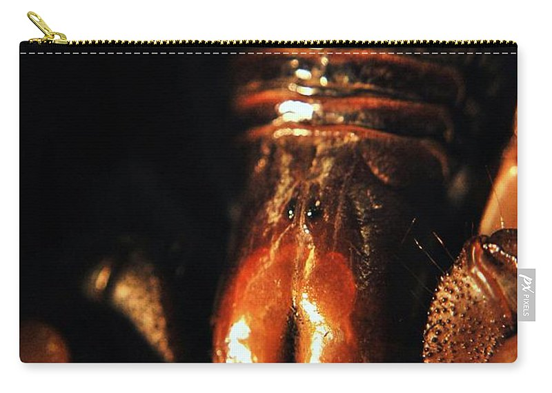 Yhun Suarez Carry-all Pouch featuring the photograph Emperor Scorpion 3.0 by Yhun Suarez