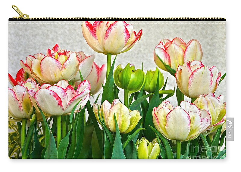White And Red Tulips Carry-all Pouch featuring the photograph Ensemble by Byron Varvarigos