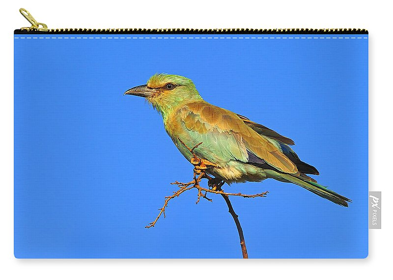 European Roller Carry-all Pouch featuring the photograph Eurasian Roller by Tony Beck