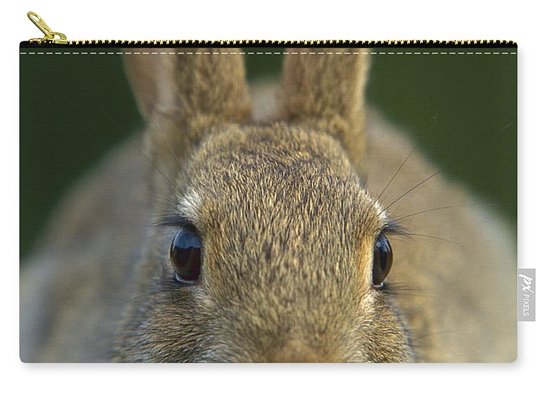 Mp Carry-all Pouch featuring the photograph European Rabbit Oryctolagus Cuniculus by Cyril Ruoso