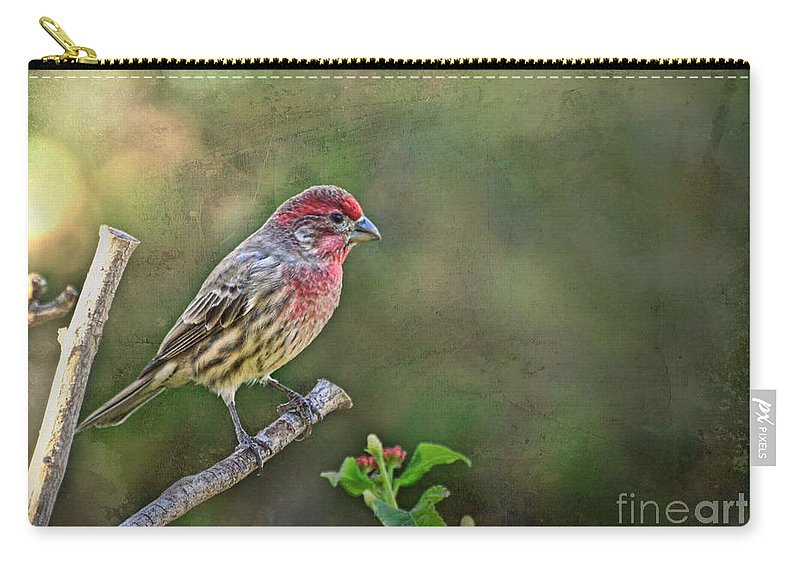 Nature Carry-all Pouch featuring the photograph Evening Finch Blank Greeting Card by Debbie Portwood