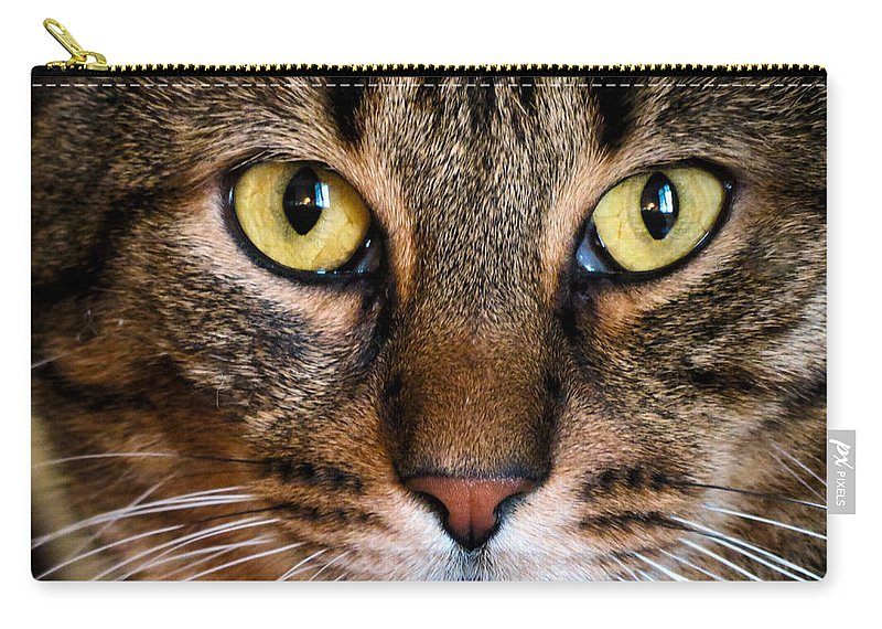 Cat Carry-all Pouch featuring the photograph Face Framed Feline by Art Dingo