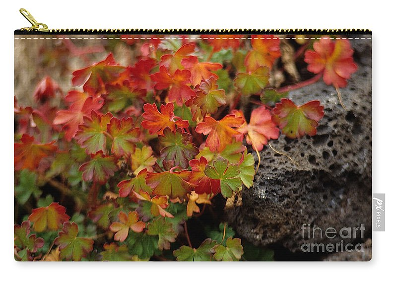 Fall Carry-all Pouch featuring the photograph Fall Brilliance by Sharon Elliott