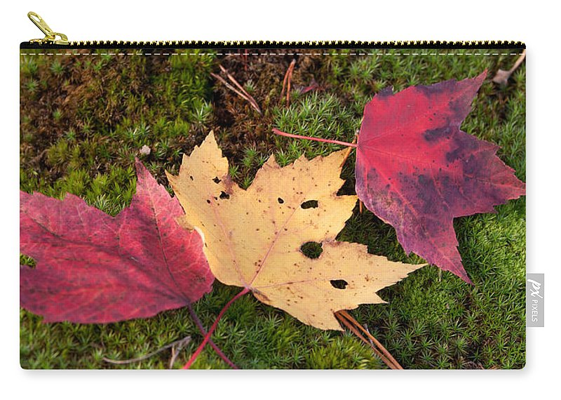 Fall Carry-all Pouch featuring the photograph Fall Colors by David Troxel