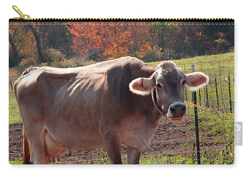 United_states Carry-all Pouch featuring the photograph Fall Cow by LeeAnn McLaneGoetz McLaneGoetzStudioLLCcom