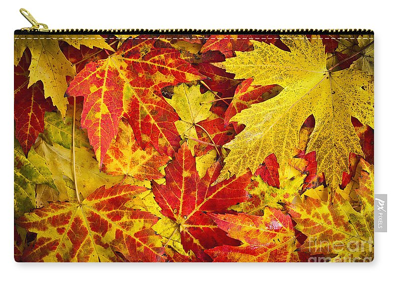 Leaves Carry-all Pouch featuring the photograph Fallen Autumn Maple Leaves by Elena Elisseeva