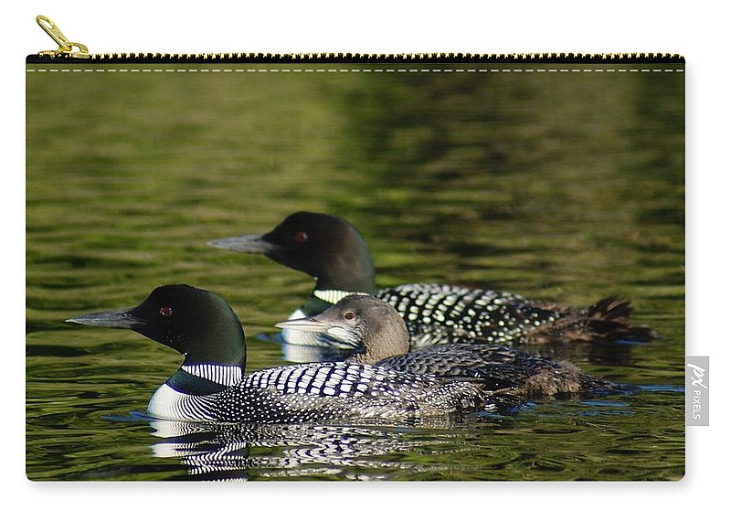 Loons Carry-all Pouch featuring the photograph Family Swim by Steven Clipperton