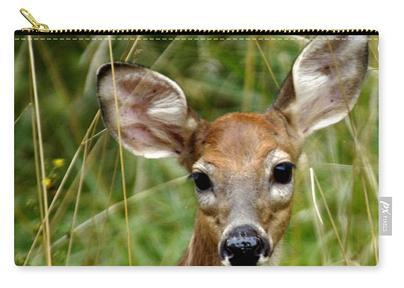 Fawn Carry-all Pouch featuring the photograph Fawn Portrait by Randall Branham