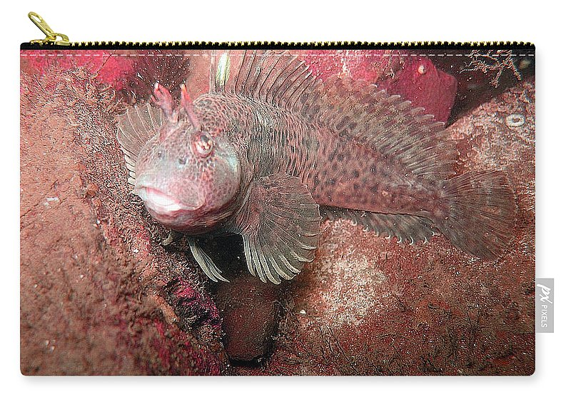Female Feather Blenny Carry-all Pouch featuring the photograph Feather Blenny Female by Paul Ward